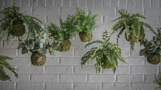 Detailed image of hanging plants at the Quality Airport Hotel Dan