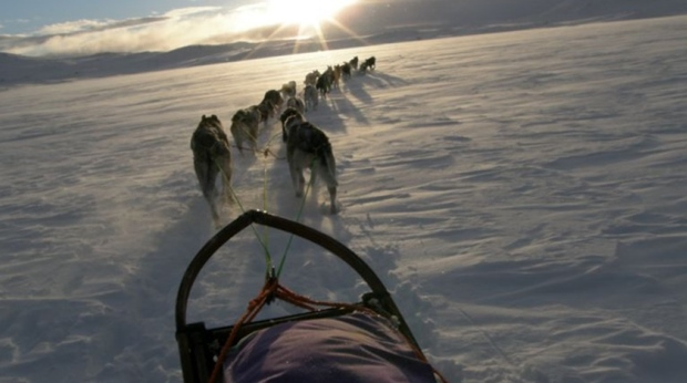There is optimal conditions for trying dog sledding during the winter at Quality Voringfoss Hotel in Eidfjord