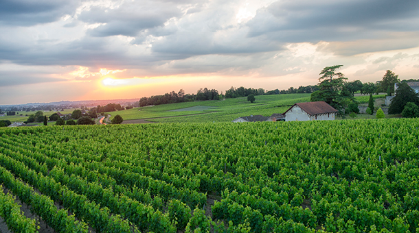Treat yourself to a visit in the beautiful Bordeaux wine region